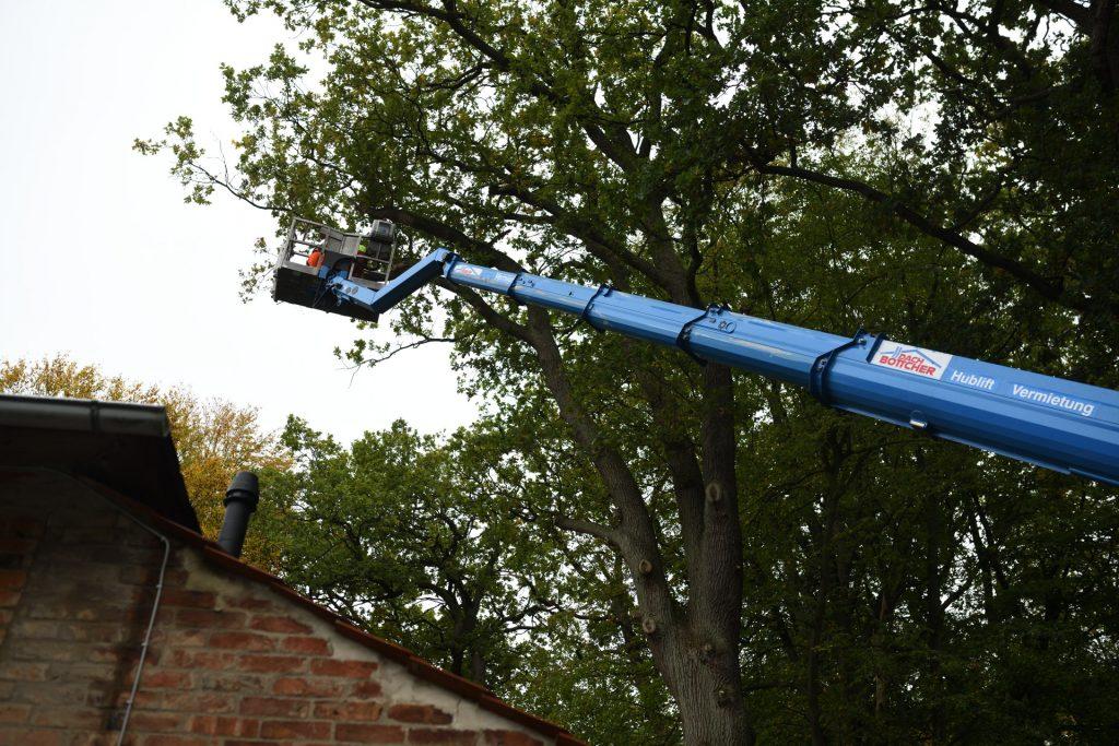 Baumschnitt Hubsteiger 2019